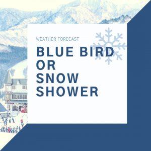 安排日本滑雪自由行,雪場的雪況應該在哪裡找?(攻略都給你)